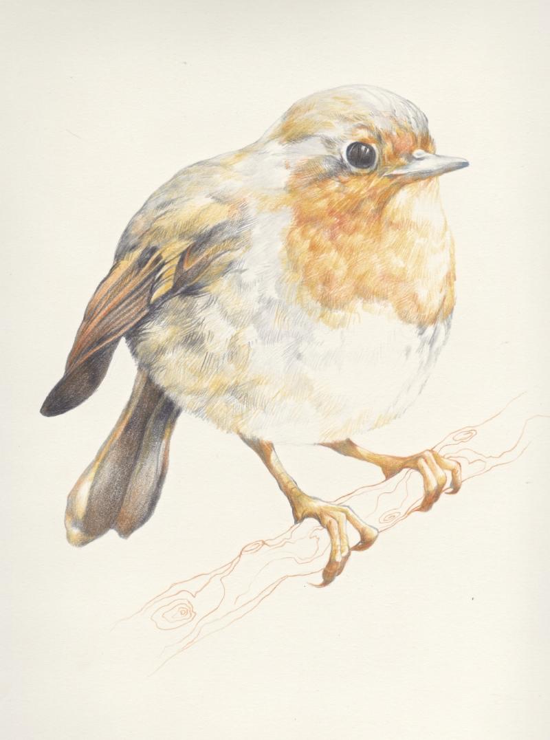 Orange Bird, Francis.jpg