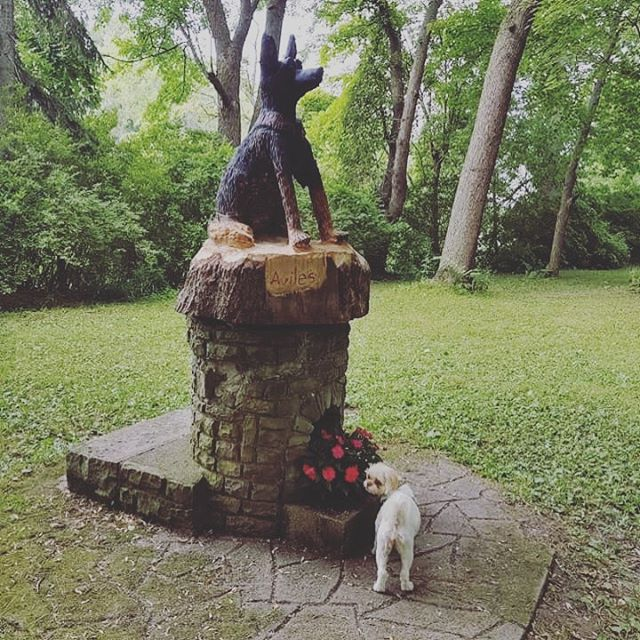 "Sophie says ""what's the big deal about this Statue?  #littledogsrule #littledogs #littlesogsofinstagram #stoptosmelltheflowers #dogsofinstagram #dogsofbuffalo #ellicottislandbarkpark #friendsofellicott #ellicottislandbarkparkart Photo Credit: Marilyn Carmichael"