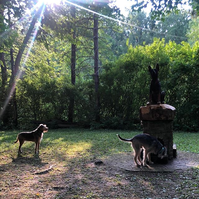 Sometimes it's hard to get dogs to sit and focus while they visit the Ellicott Island bark Park.  But the park is all about freedom and being off leash right? This is Norm and Vera.  #ellicottislandbarkparkart #mixedbreeds #mixedbreedmutts #dogsofbuffalo #dogsofinstagram #exoticterrierblends #exoticterrier #dogparks #dogparklife #ellicottislandbarkpark #friendsofellicott
