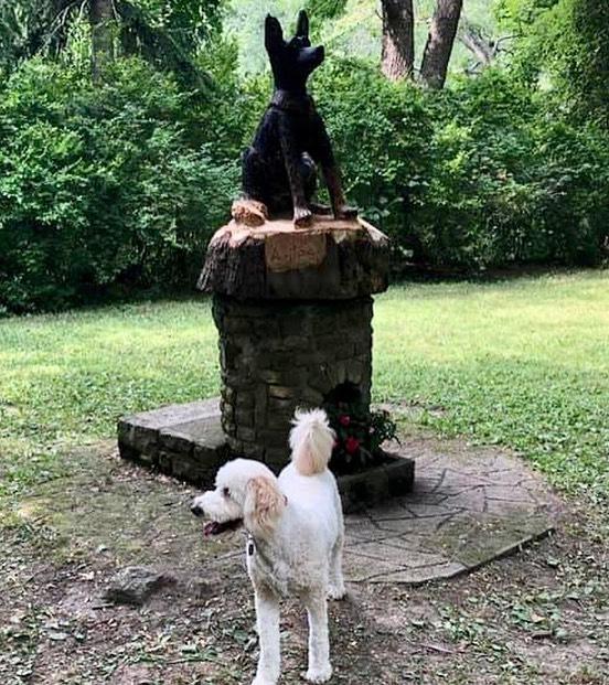 Jax is taking the opportunity to get his photo with our new artwork  #ellicottislandbarkparkart #dogsofinstagram #dogsposing #dogsofbuffalo #dogslife #dogpark #dogparklife #ellicottislandbarkpark #friendsofellicott  Photo Credit: Jeff Aguglia