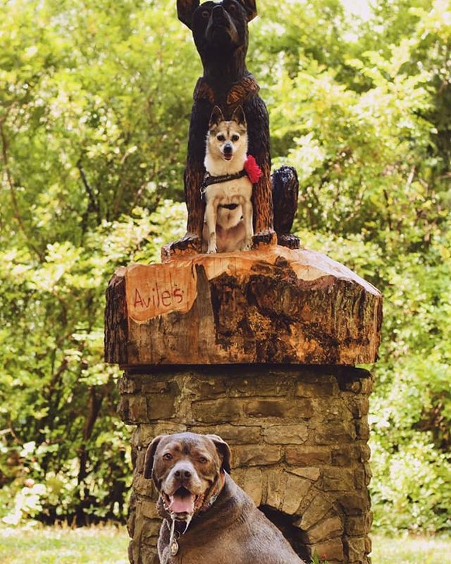 Martha and Lola are posing with the newest addition to the Bark Park. #ellicottislandbarkparkart #ellicottislandbarkpark #dogsofinstagram #dogsofbuffalo #dogsposingforpictures #cutedogfriends #friendsofellicott  Photo Credit: Lindsay Gail Kustich