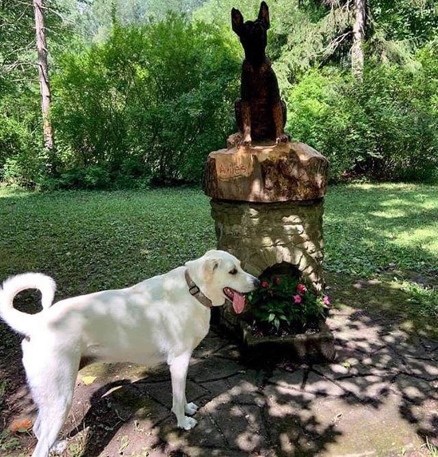 Honey really doesn't see what the big deal is with this statue  #ellicottislandbarkparkart #ellicottislandbarkpark #bigdog #dogparklife #dogsofinstagram #dogsofbuffalo #friendsofellicott  Photo Credit: Susan Strenkoski