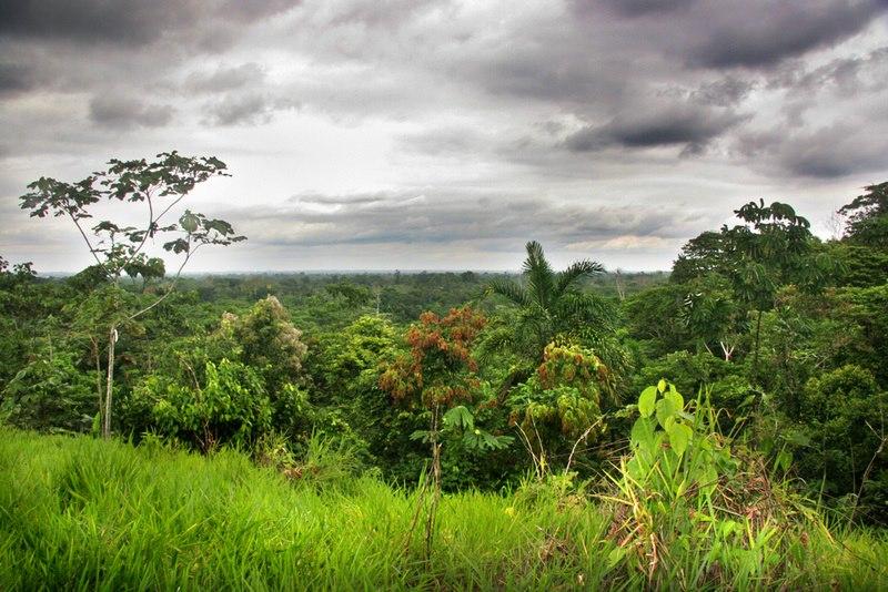 junglesky.jpg