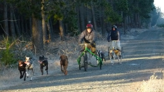 Dryland Racing — Canterbury Sled Dog Club, Christchurch, New