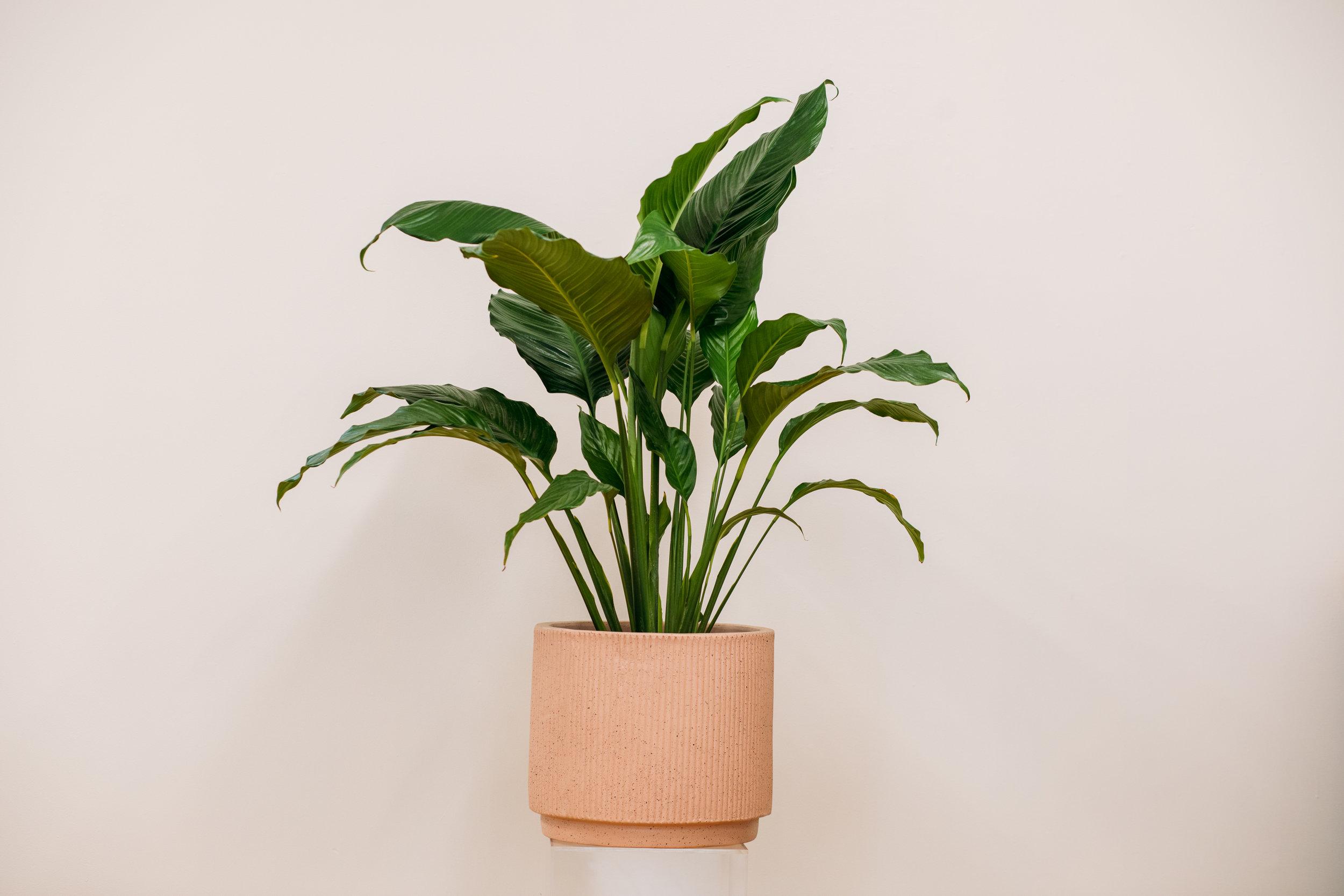 plants-55.jpg