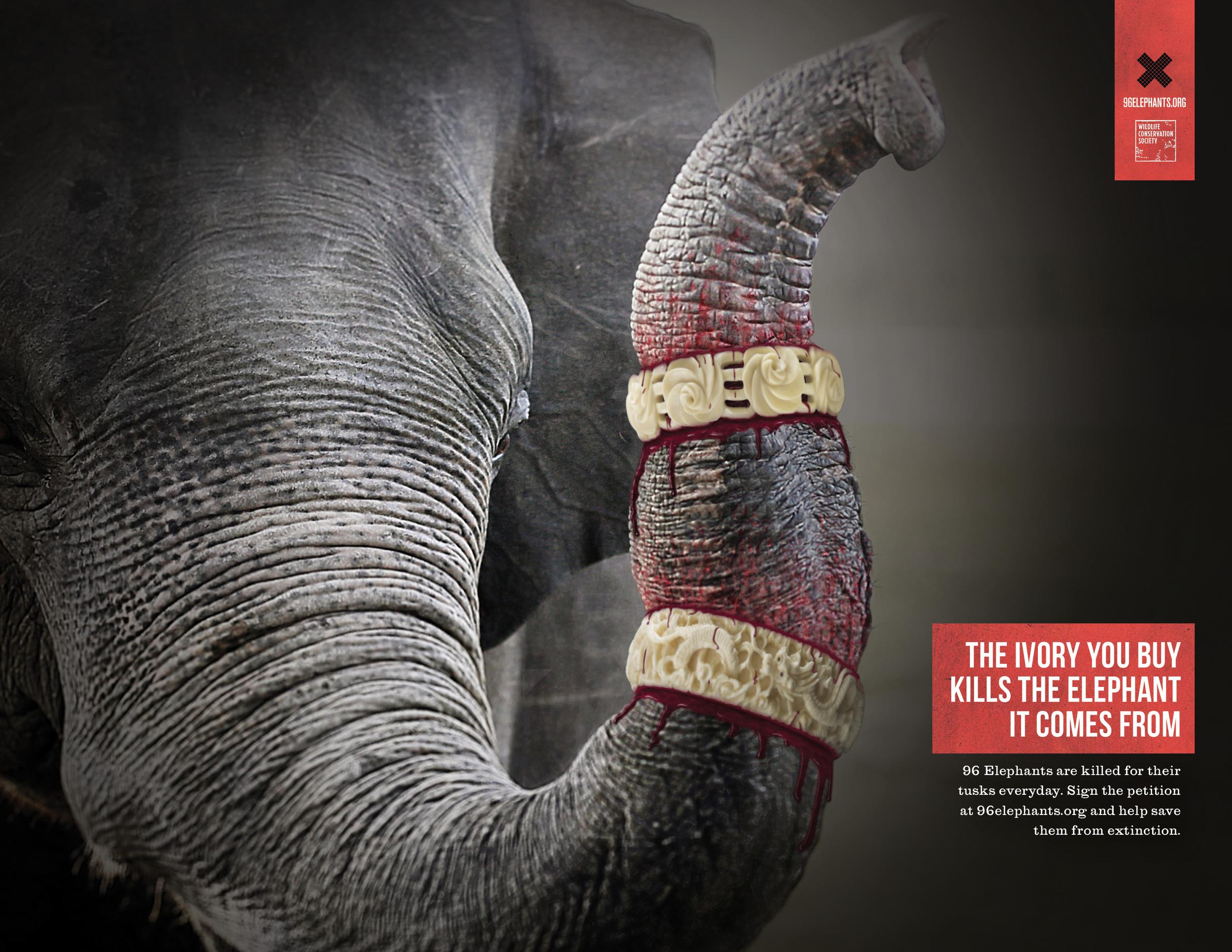 96 Elephants print_letter2.jpg