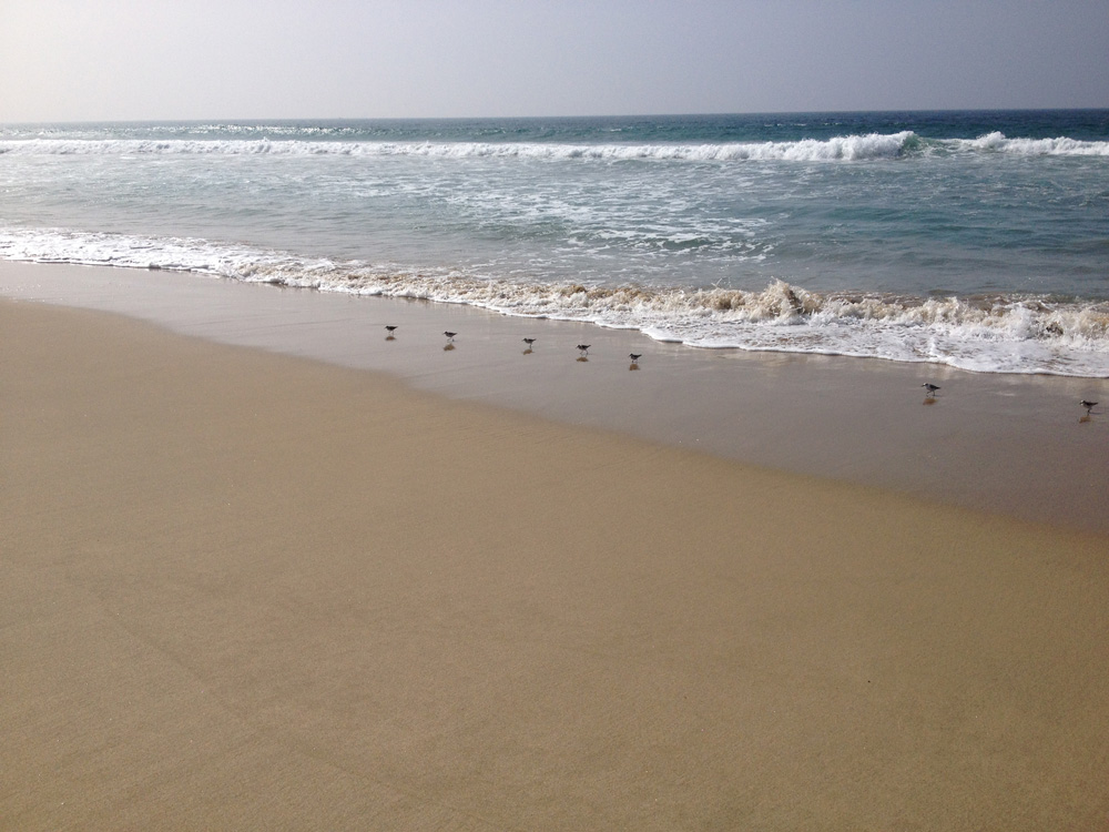Birds on the beach 2.jpg