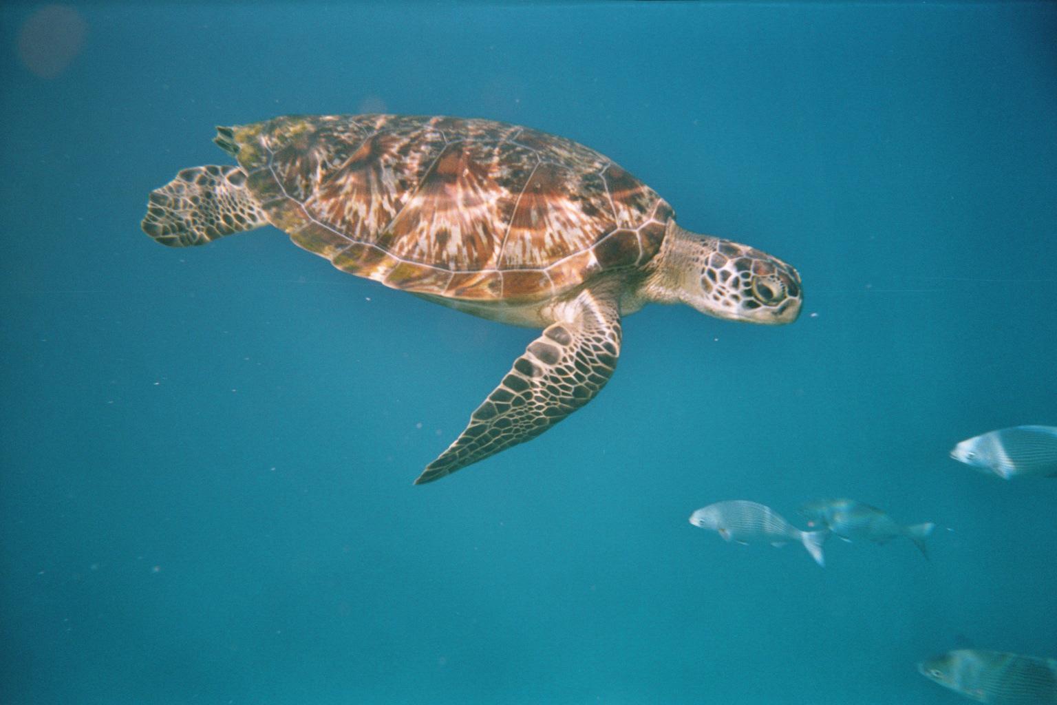 Turtle Similans.jpg