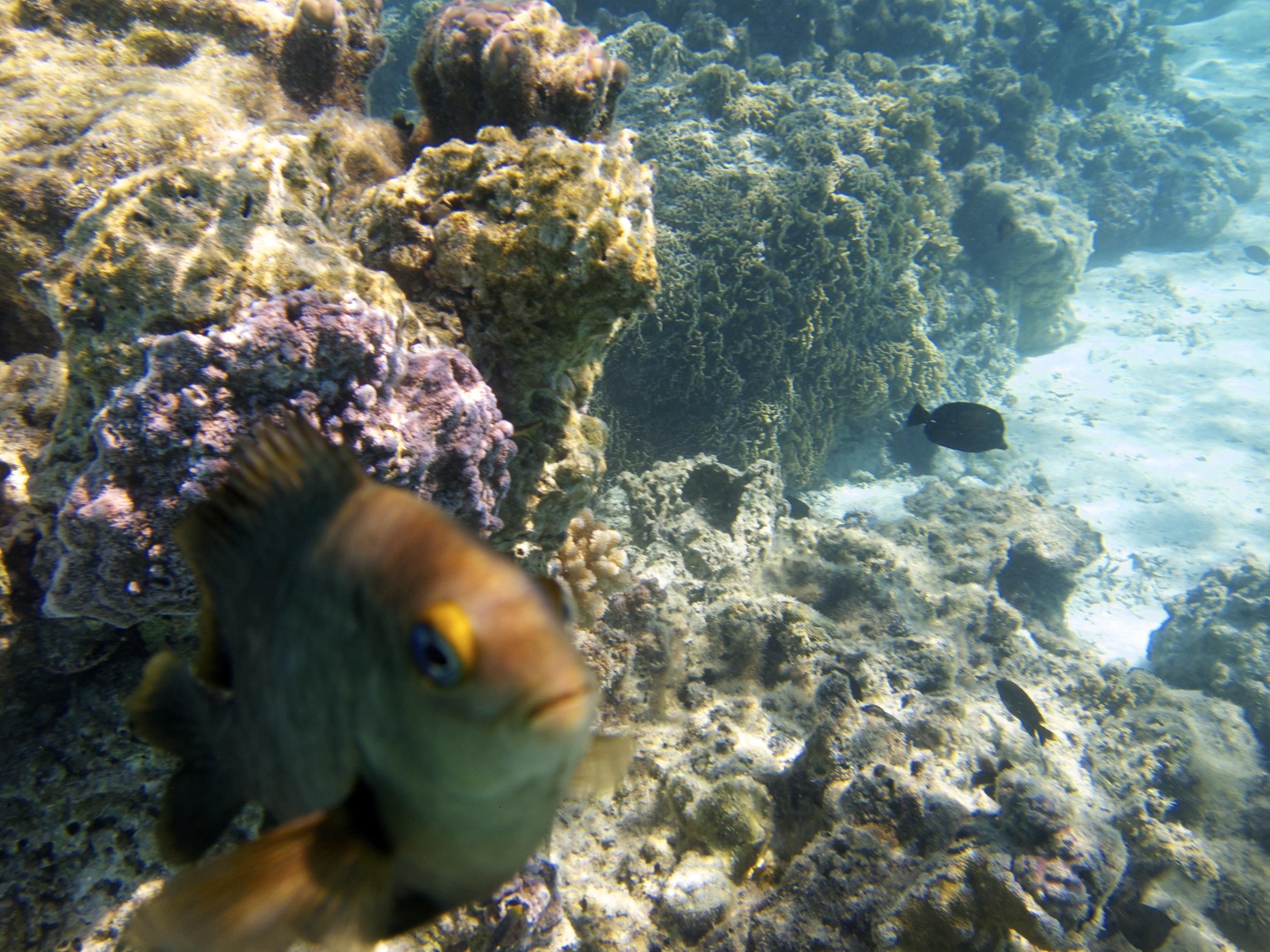 diving_in_Myanmar.jpg