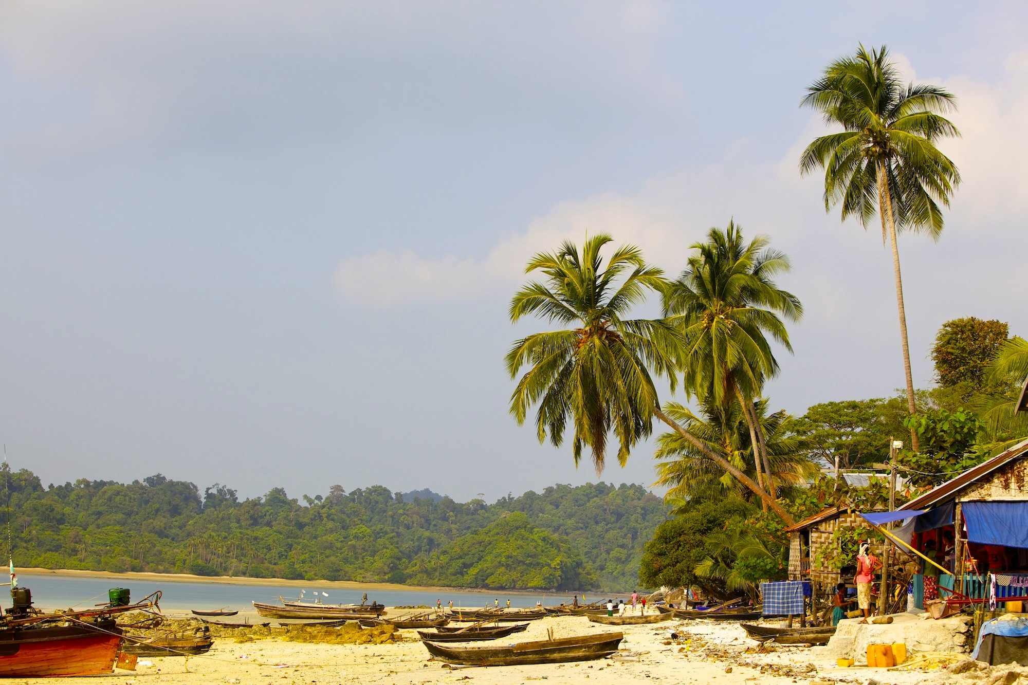 palm trees at the beach mergui.jpg