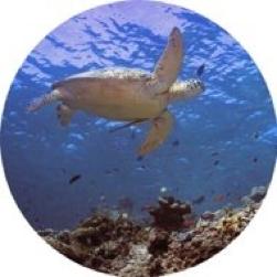 underwater encounters.png
