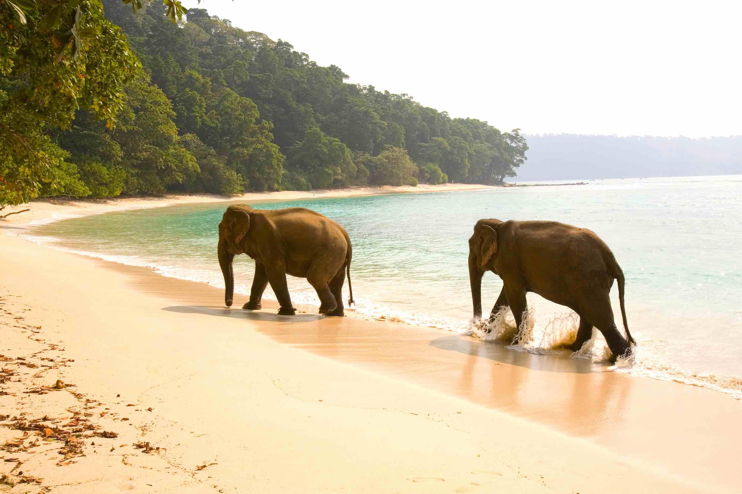 Andaman Islands yacht charter elephants beaches XS.jpg