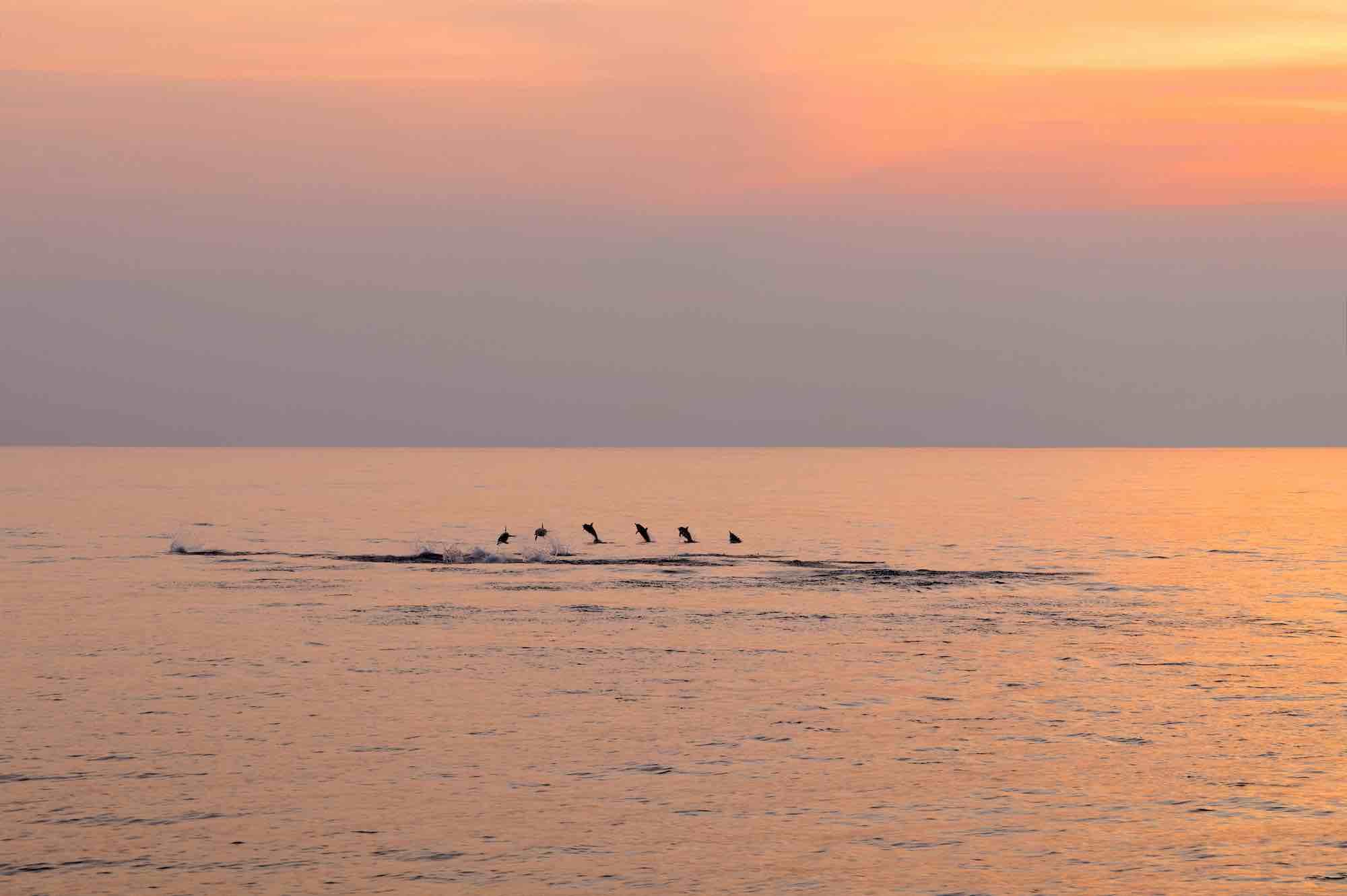 Andaman Islands_dolphin group dumping sailing holiday_XS.jpeg