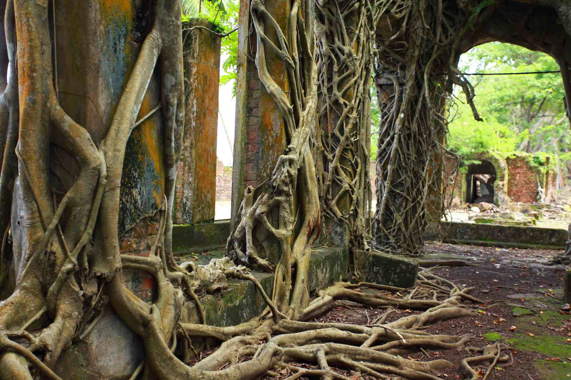 Andaman Islands_old trees and brick houses sailing trip_XS.jpeg