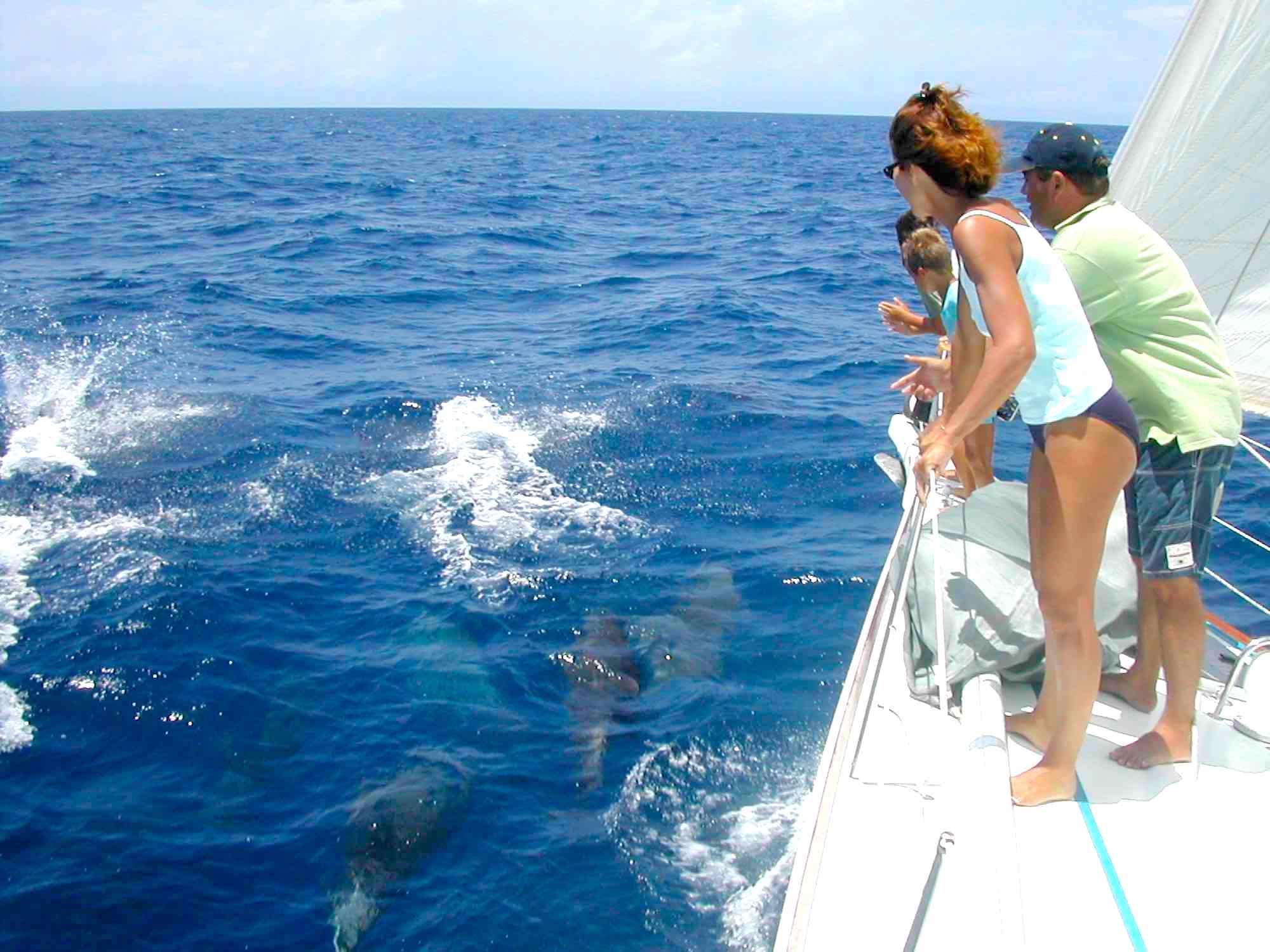 Dalai_fun dolphin watch on blue waters of Myanmar's Mergui_XS.jpeg