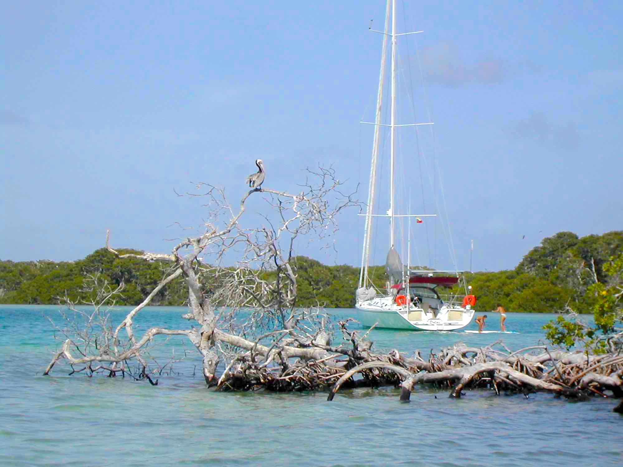 Dalai_anchoring by lush islands with interesting looking trees in Mergui_XS.jpeg