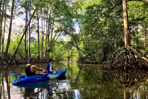Mangrove kayak copy.jpg