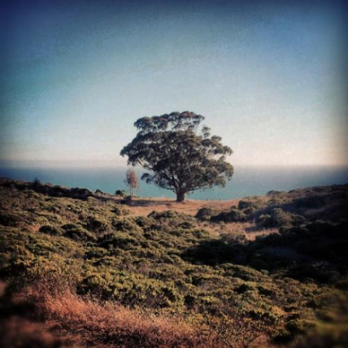instagramtree.jpg