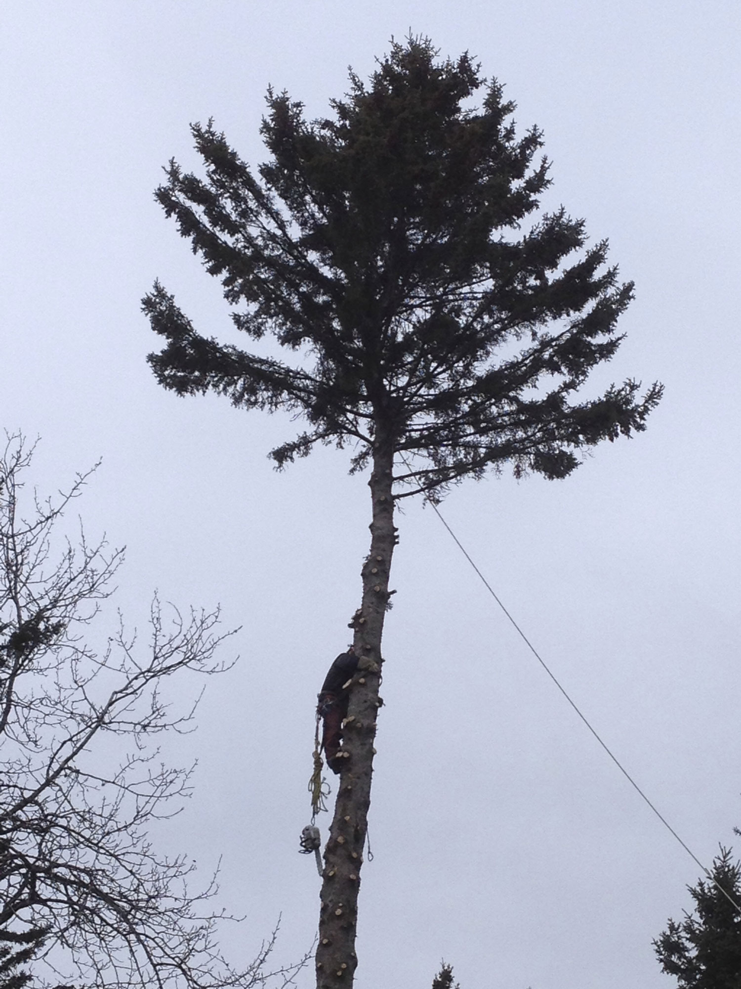 Smart_Look_Landscaping-tree-removal.jpg