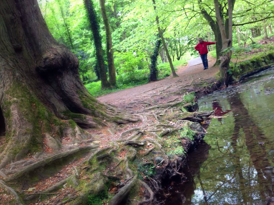 Crawfordsburn Country Park, Bank Holiday Monday - picture by Andrea Montgomery