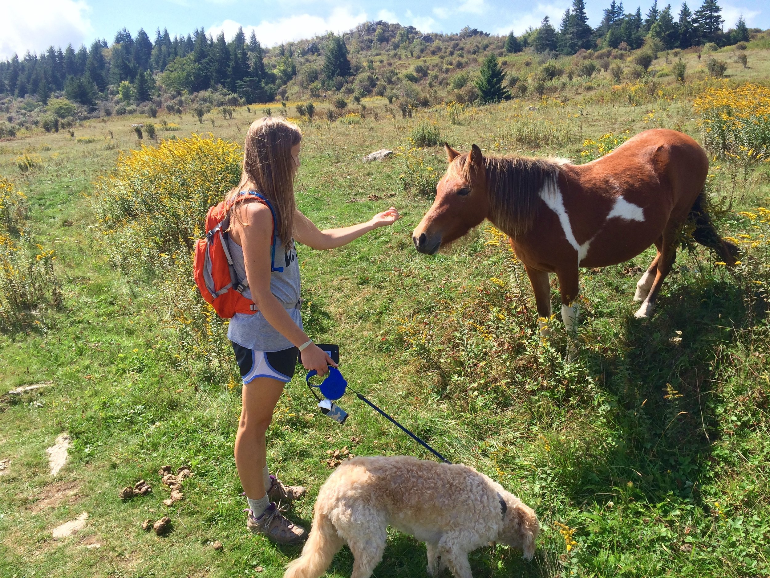 Allie and Cooper meeting one of the wild ponies that is a resident of Grayson Highlands state park.