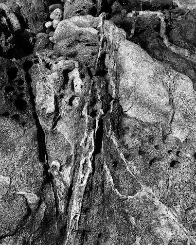Lion Tail, East Beach, 1998.jpg