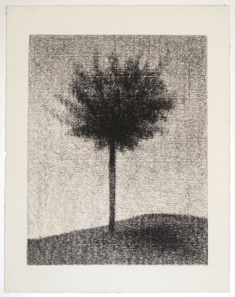 Tree Study No.1   , Andrew Nixon.