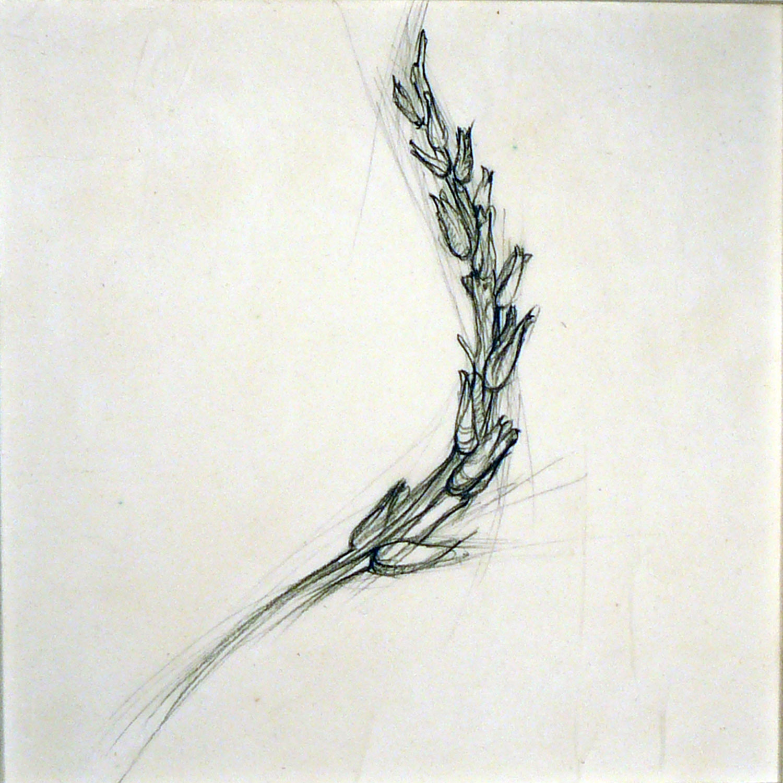 Fragment  , Ellen Lewis Watson  Graphite on Paper