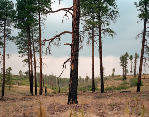 "Jacob Lake, Arizona  , Kipp Wettstein, 2009.   50"" x 60"", digital C-print"