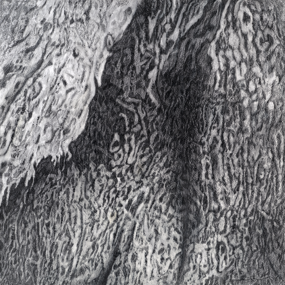 "Ulmus Americana 41°32'15"", 70°23'1""   Deborah Coolidge   48""x48"", graphite on paper"