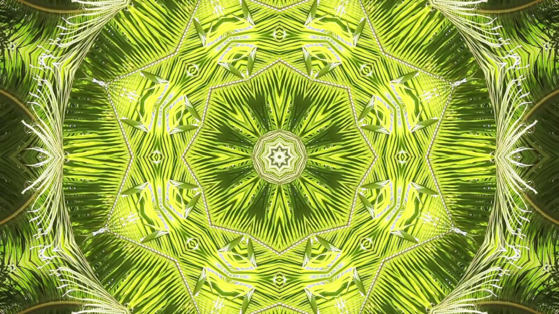 Anne Spalter  Bora Bora: Palm Fronds, 1080p HD digital video, 3 min. 2013