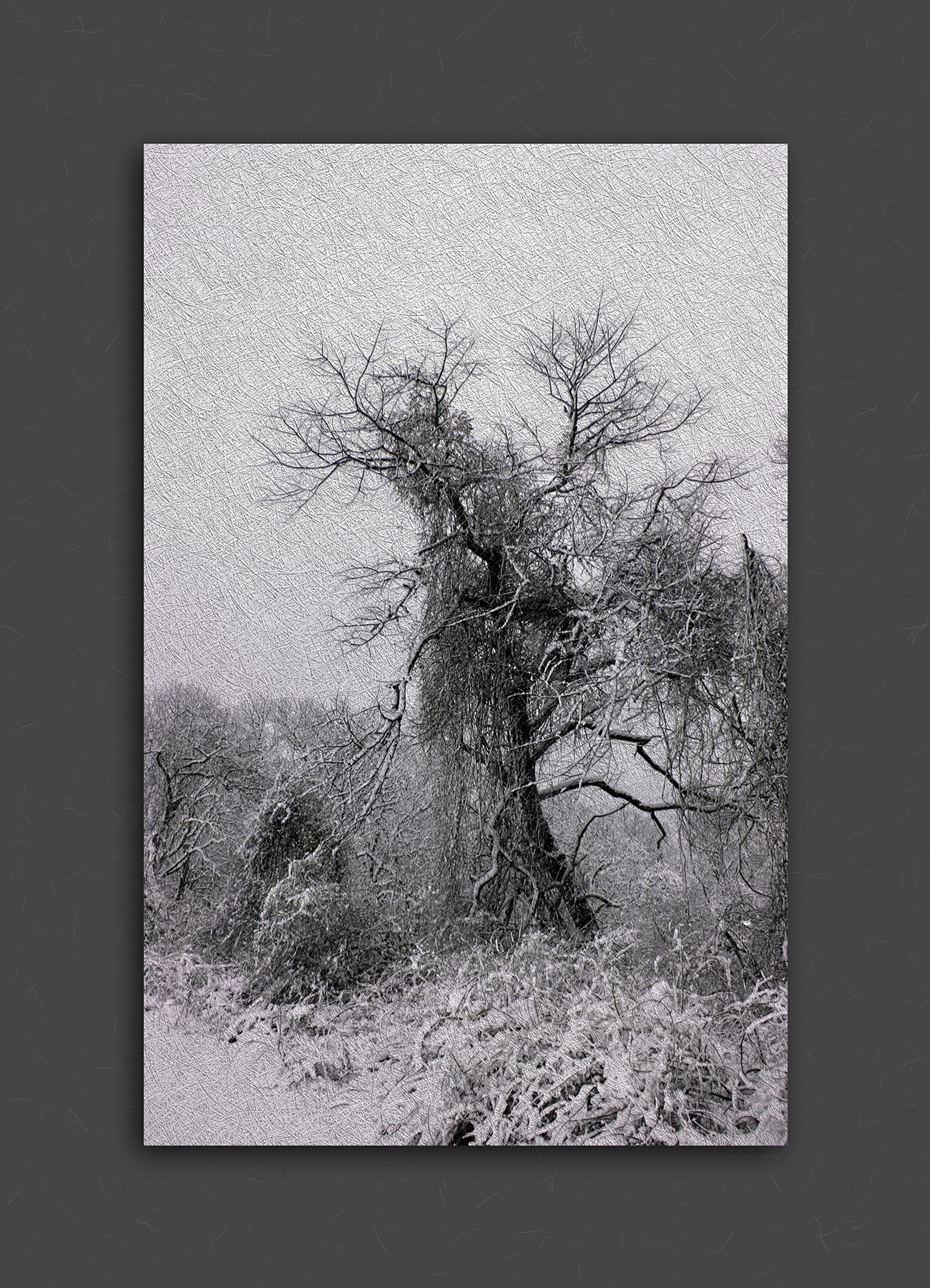 great neck tree.jpg