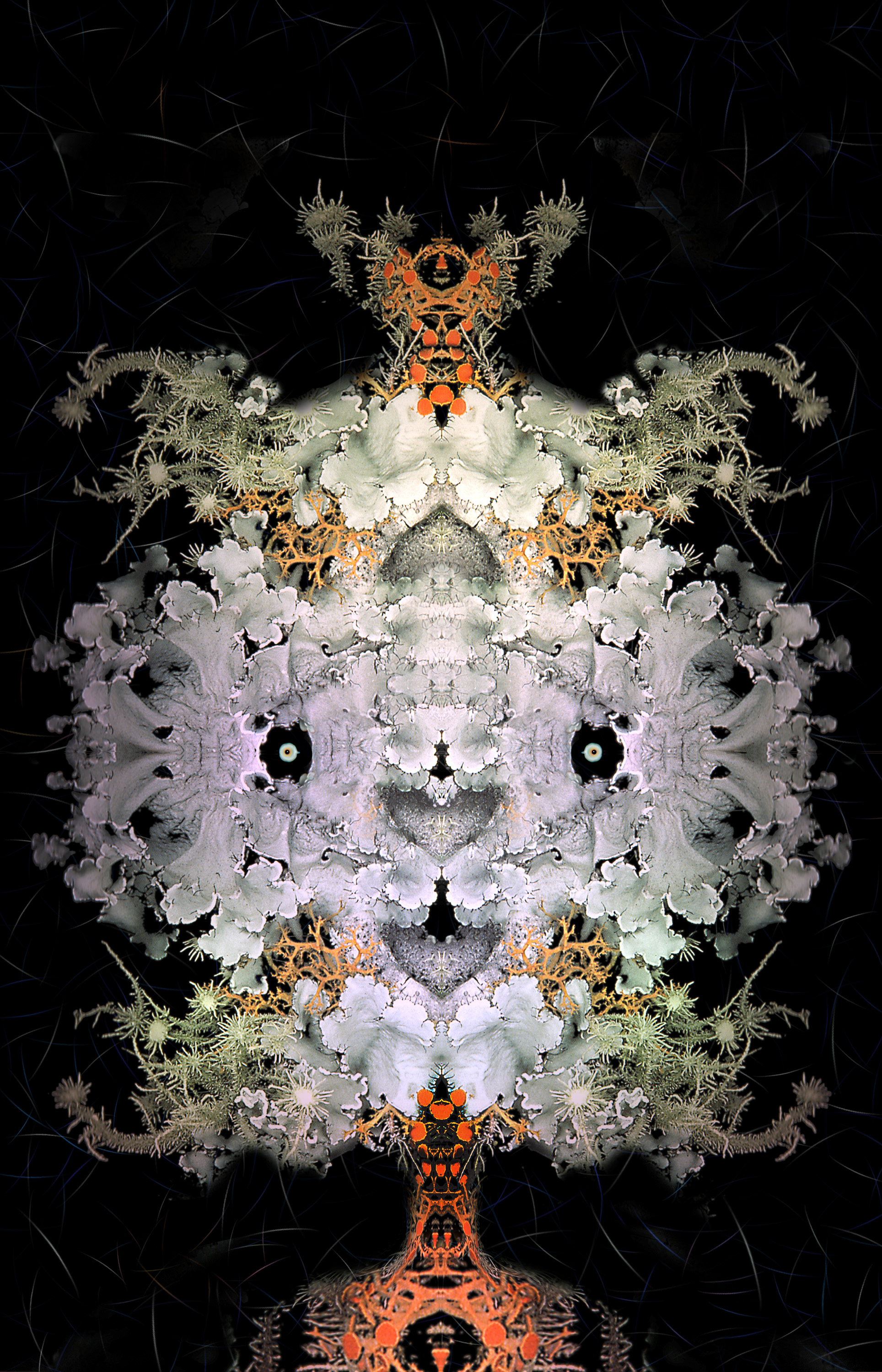 "Foliose Fruiticose Orange Man,   Harvey Goldman, 2014  26"" x 36"", Digital Print, 1/20"