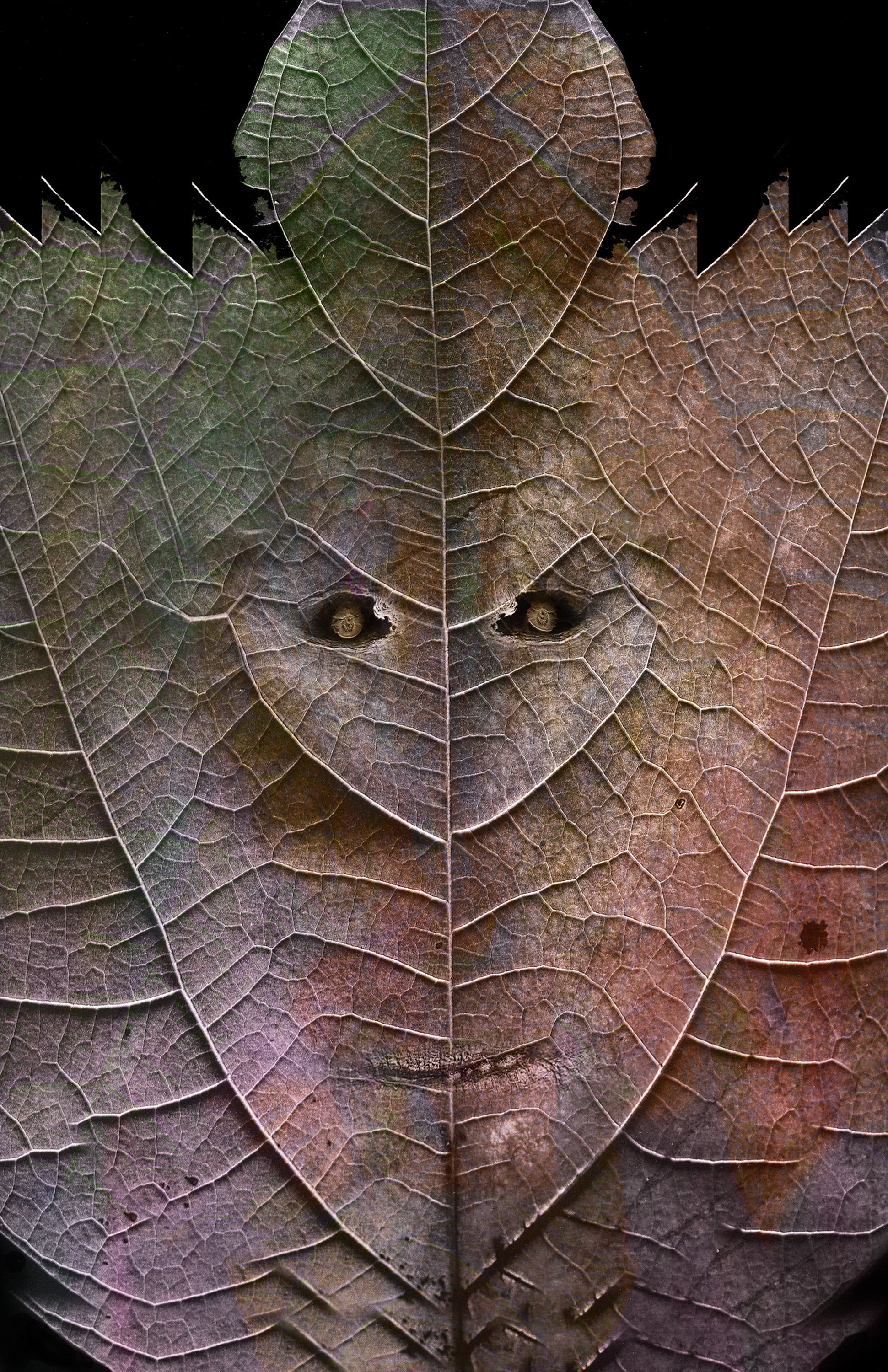 "Sassafras Face,   Harvey Goldman, 2014  26"" x 36"", Digital Print, 1/20"