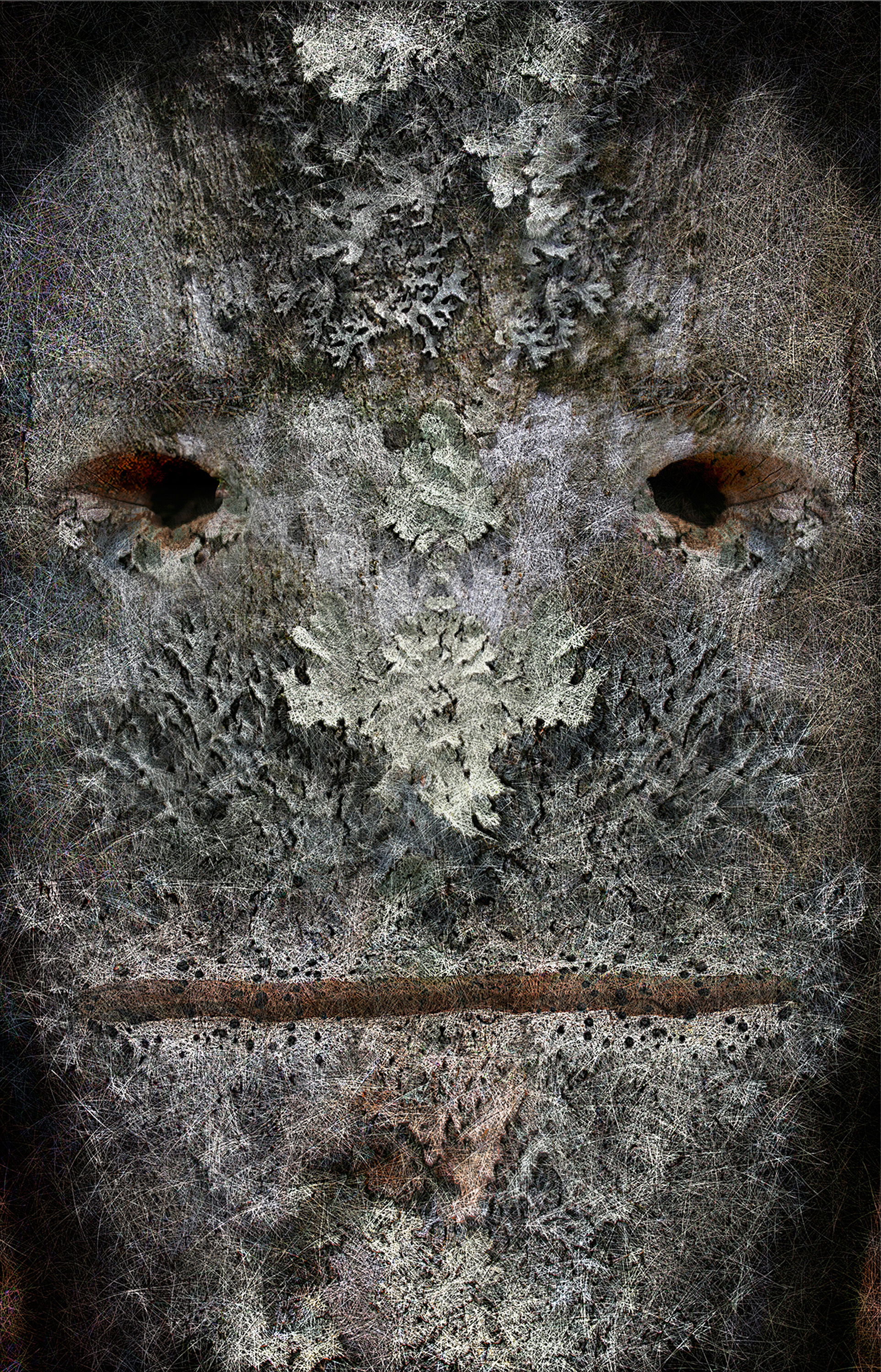 "Tree Face 1,   Harvey Goldman, 2014  26"" x 36"", Digital Print, 1/20"
