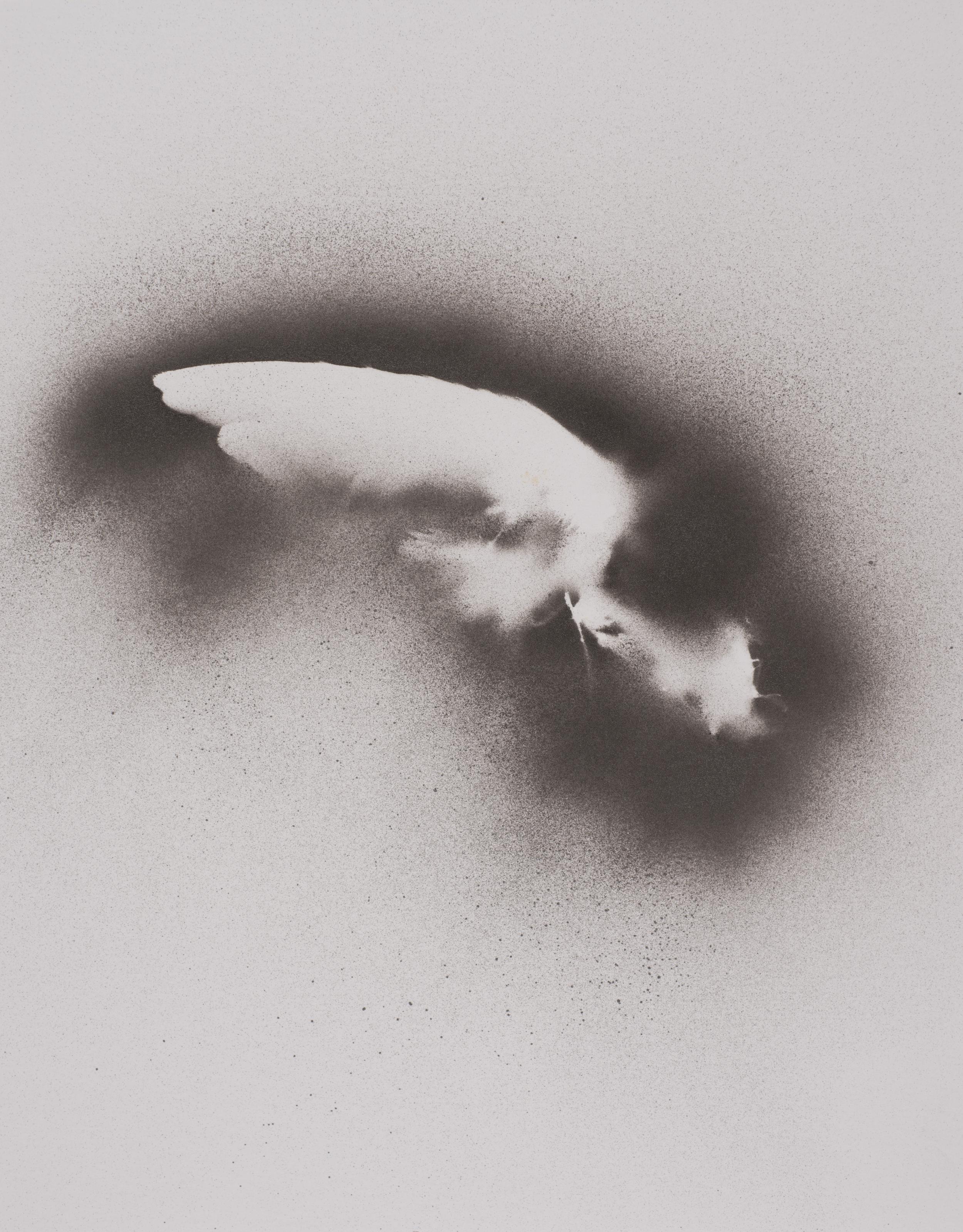 "Elizabeth Keithline   Bird Wing I , 2014  Acrylic paint on paper  15 "" x 12"""