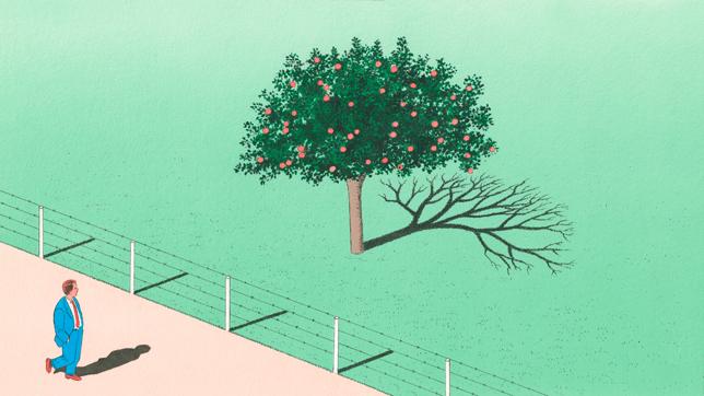 apple tree winter shadow.jpg