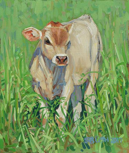 Cow Study 25