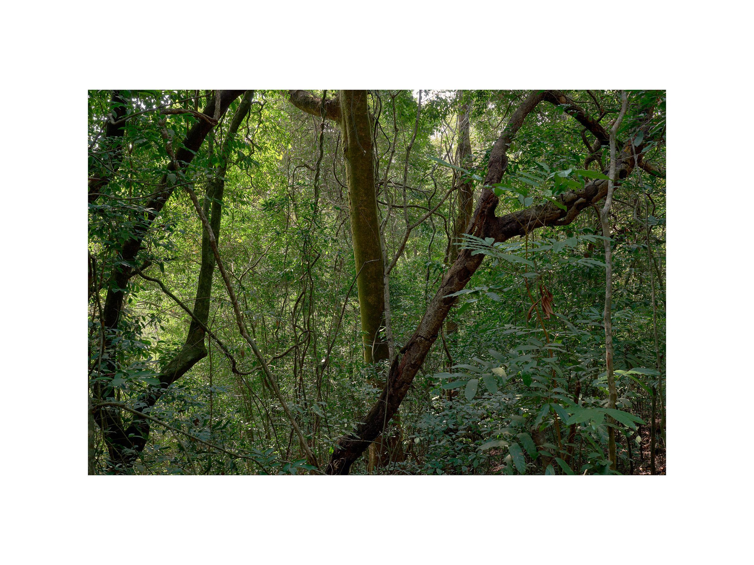 Rainforest no.1