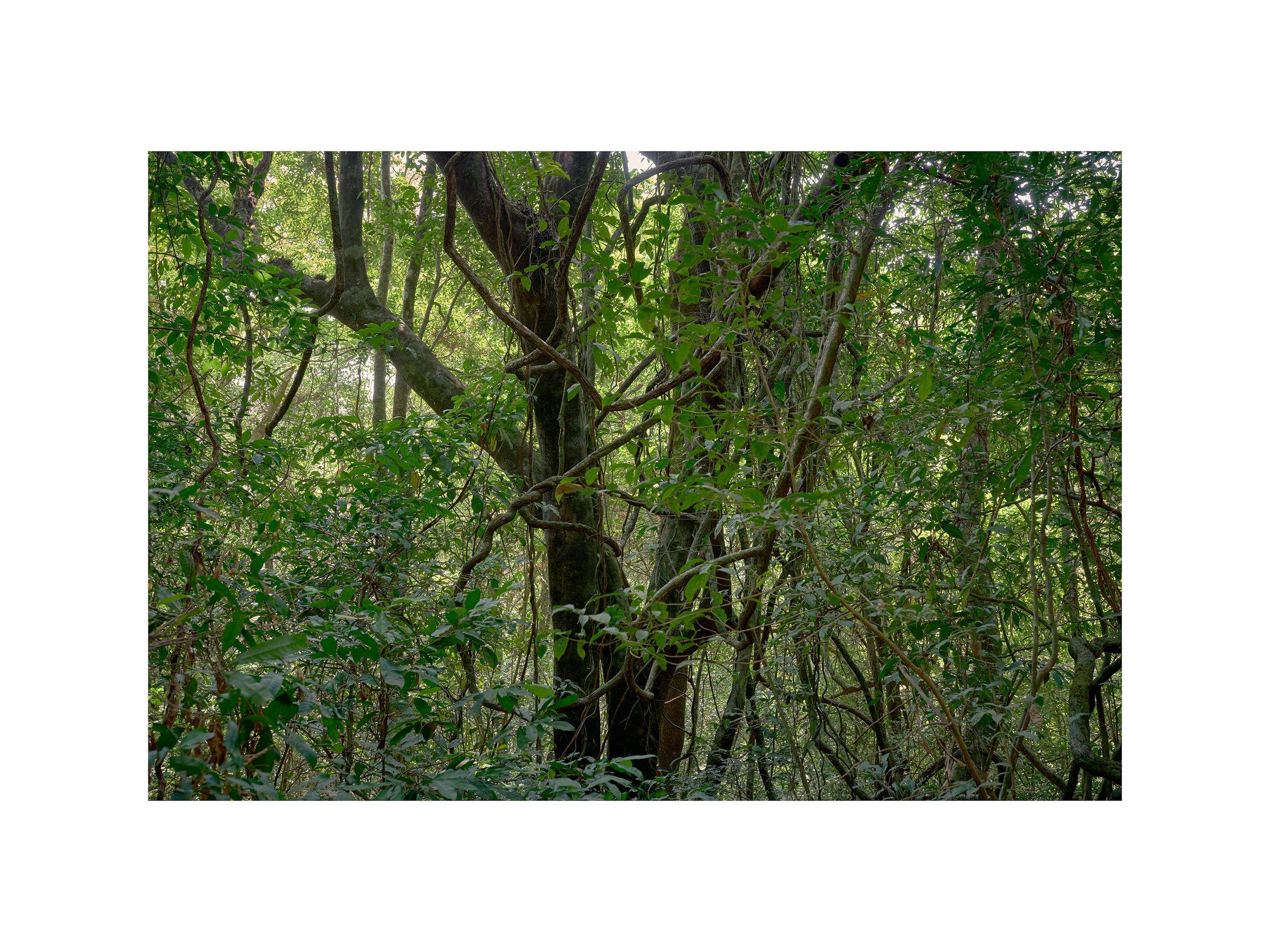 Rainforest no. 4