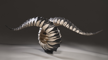 Buccinidaemain.jpg