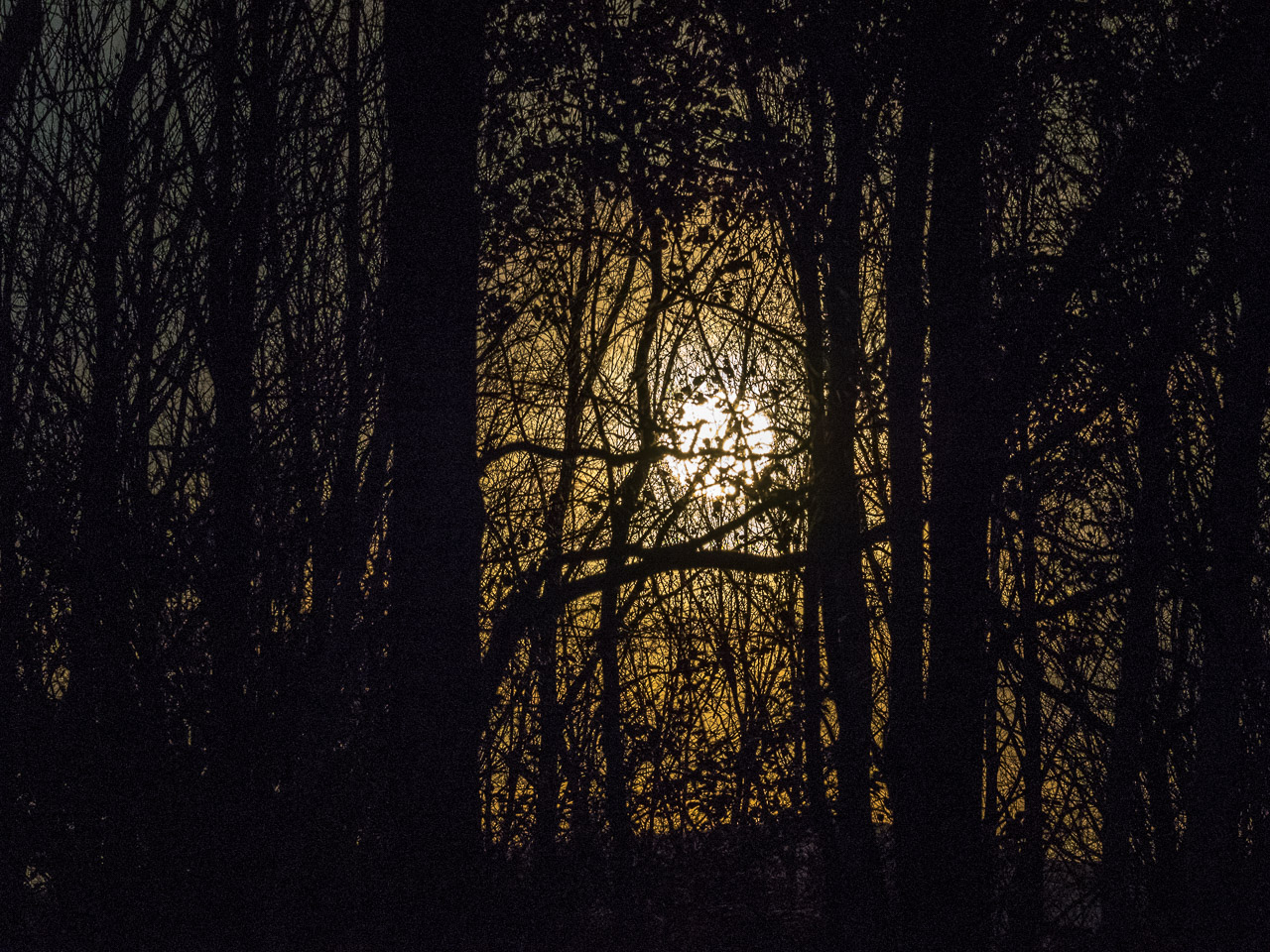 Moonlight through Silhouette Woods, Williamstown, MA