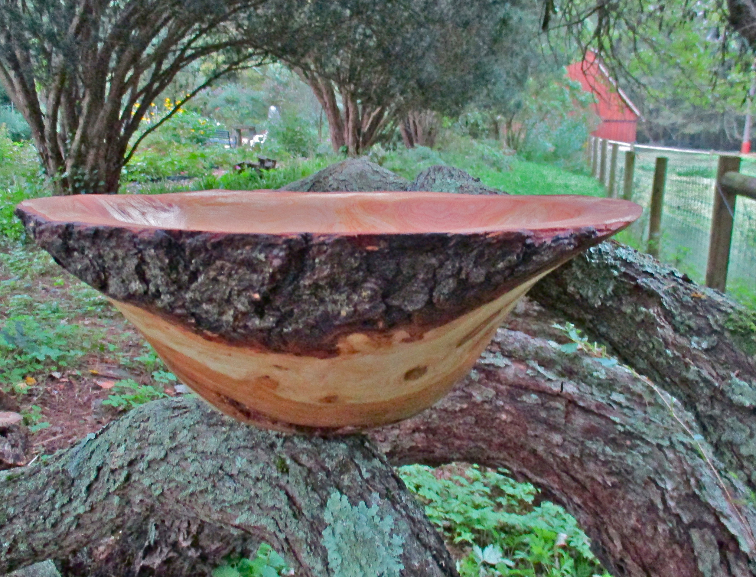 Sr. Gregory Healy Black walnut burl                  bowl.JPG