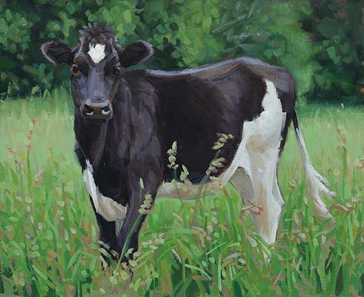 Cow Study 41