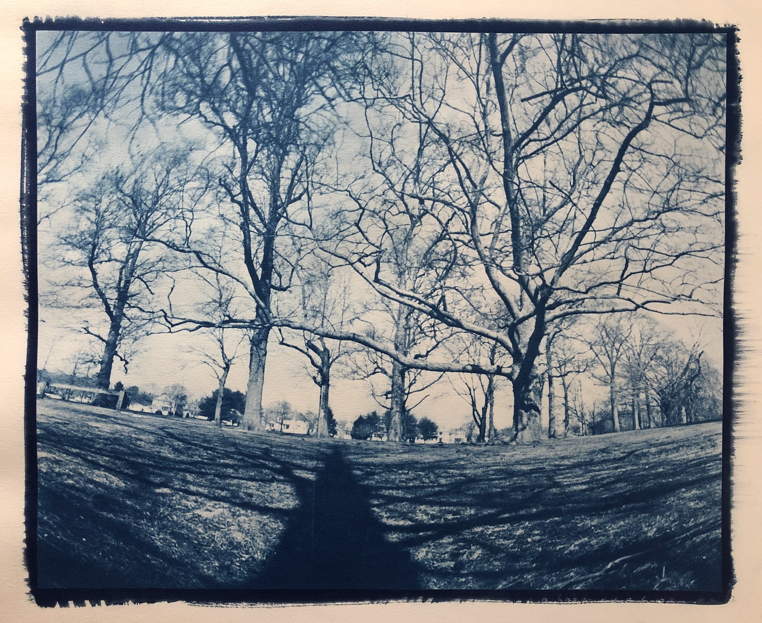 Mstpierre_Buttonwood Park.jpg