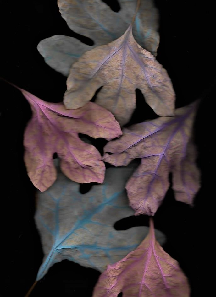 leaves 4.jpg