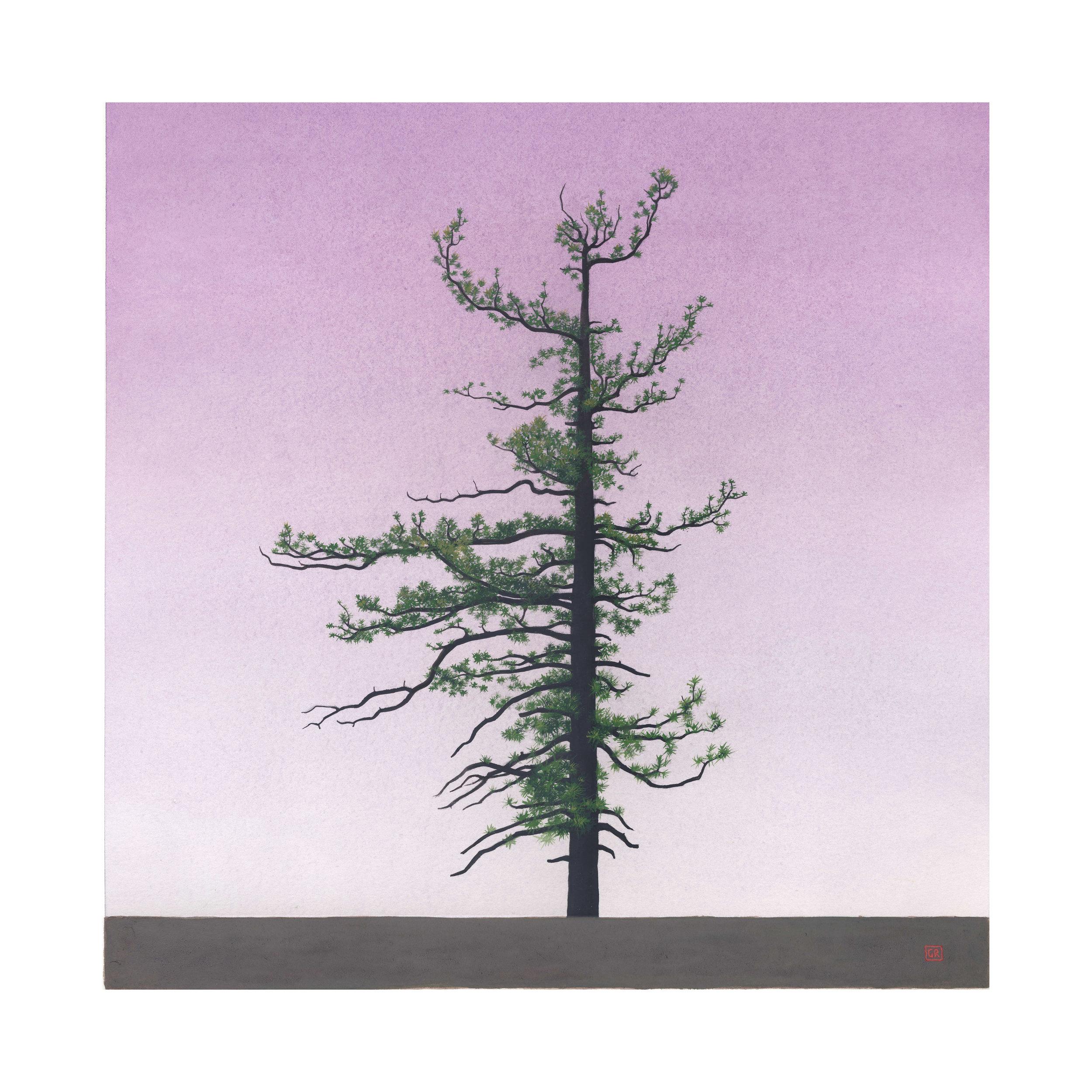 GRose_Tree(34˚20.374'N118˚0.816'W).jpg