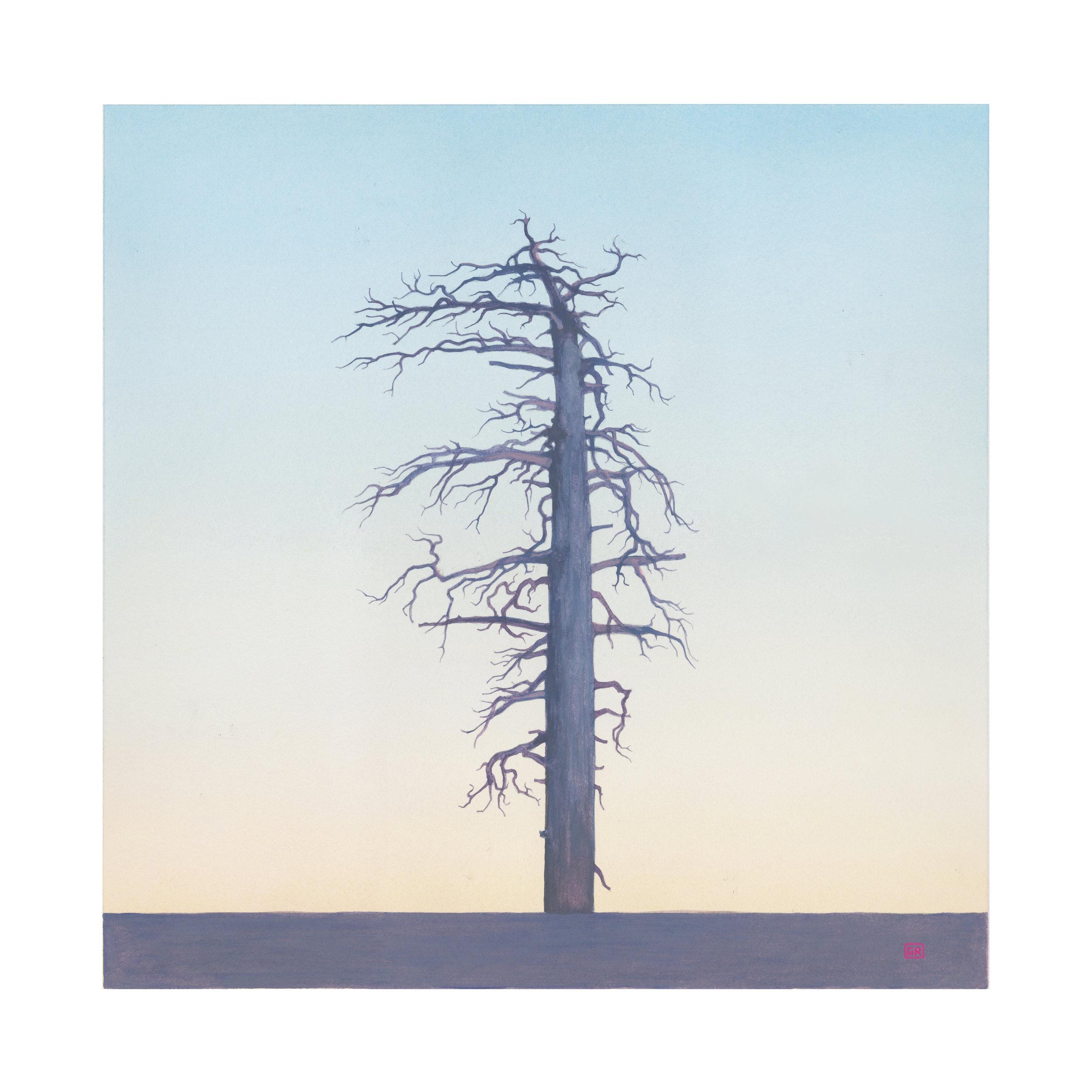 GRose_Tree(34˚20.492'N117˚56.244'W).jpg