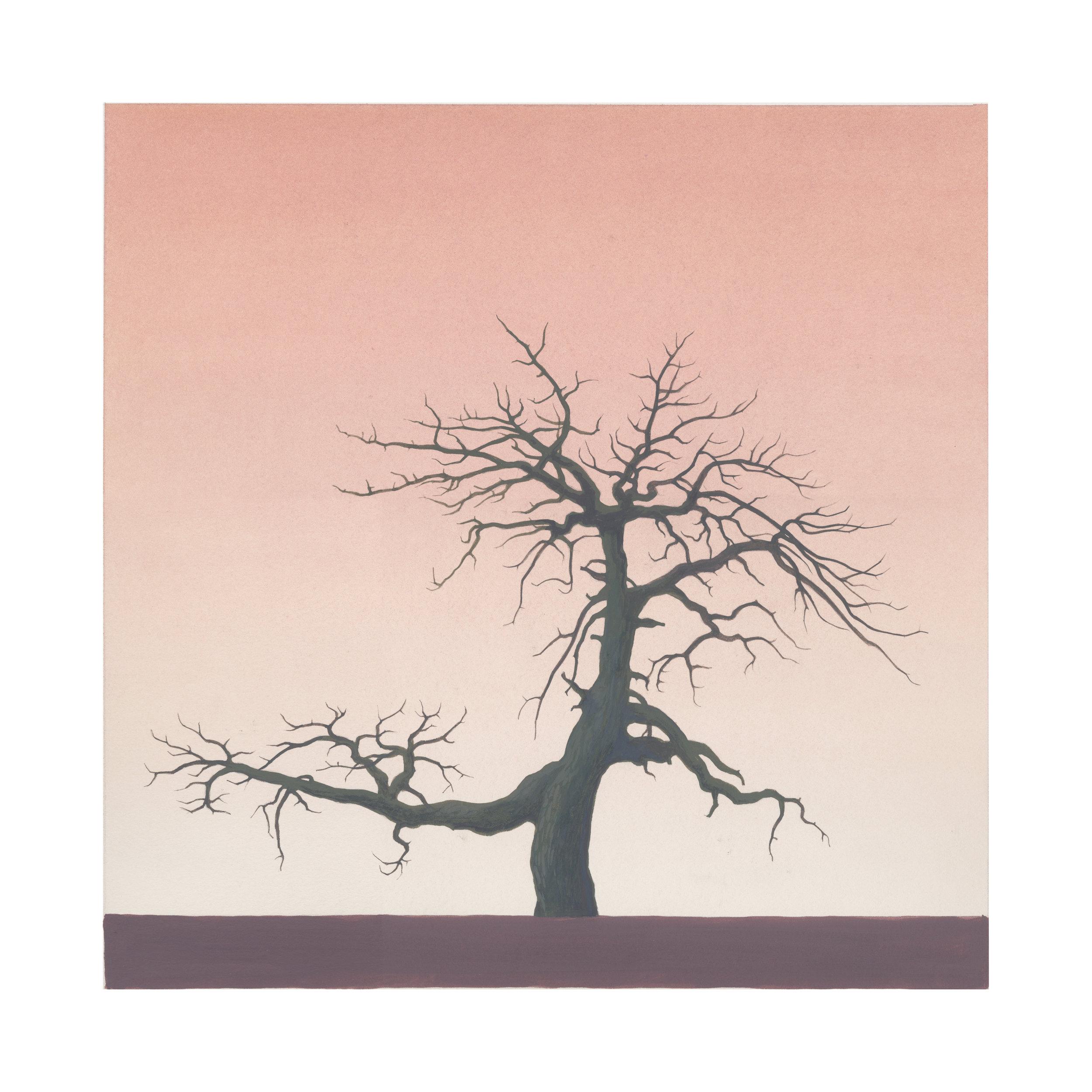 GRose_Tree(34˚20.664'N117˚49.849'W).jpg
