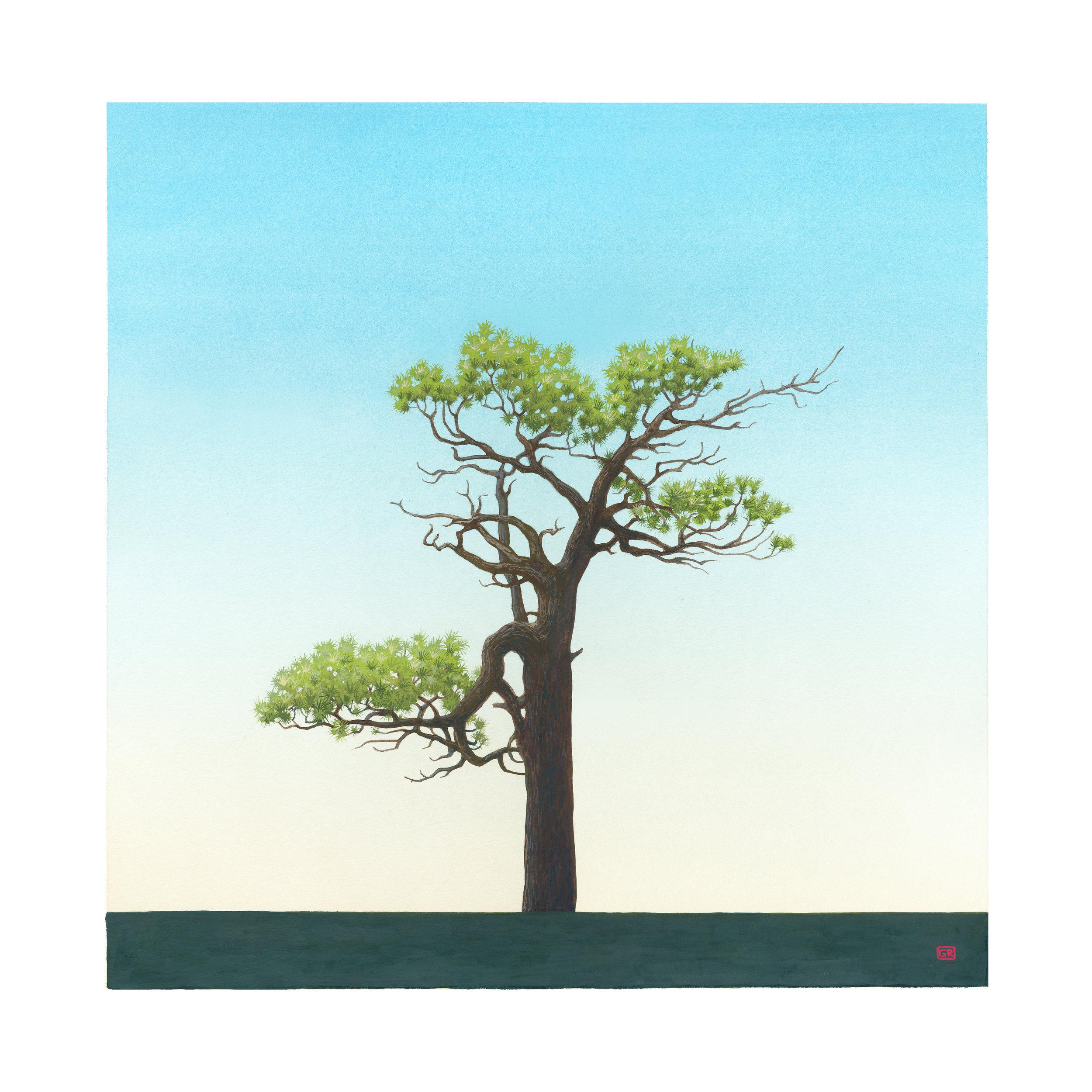 GRose_Tree(34˚21.901'N117˚48.261'W).jpg
